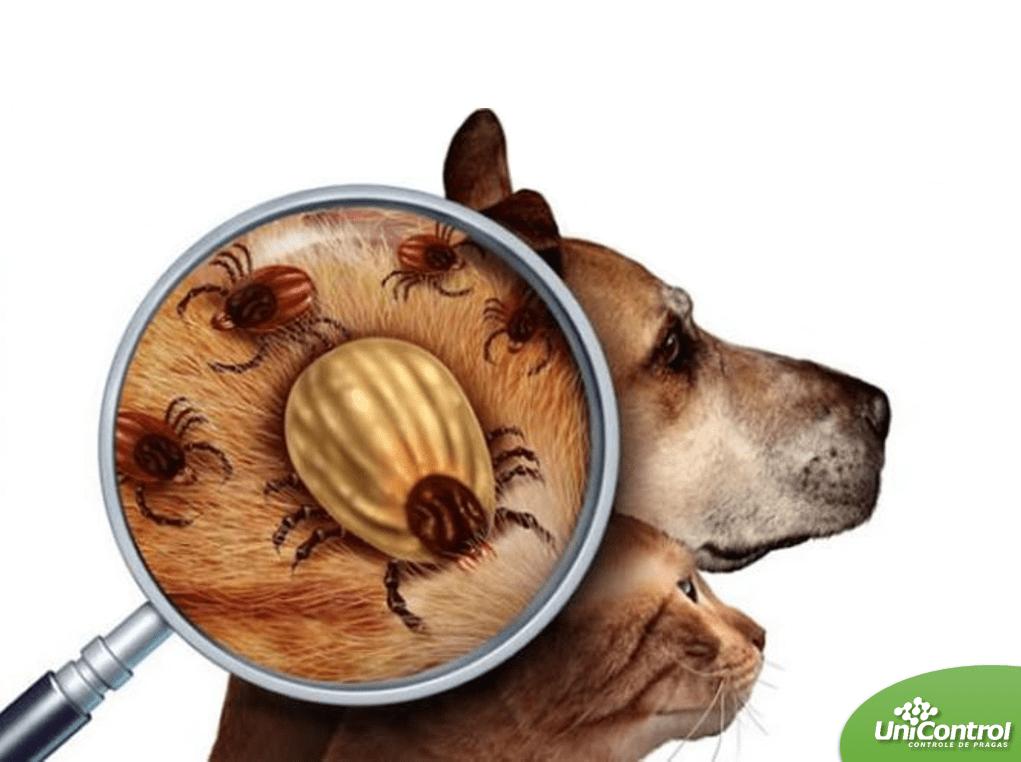 Imagem ilustrativa com cão e gato com erliquiose a doença do carrapato