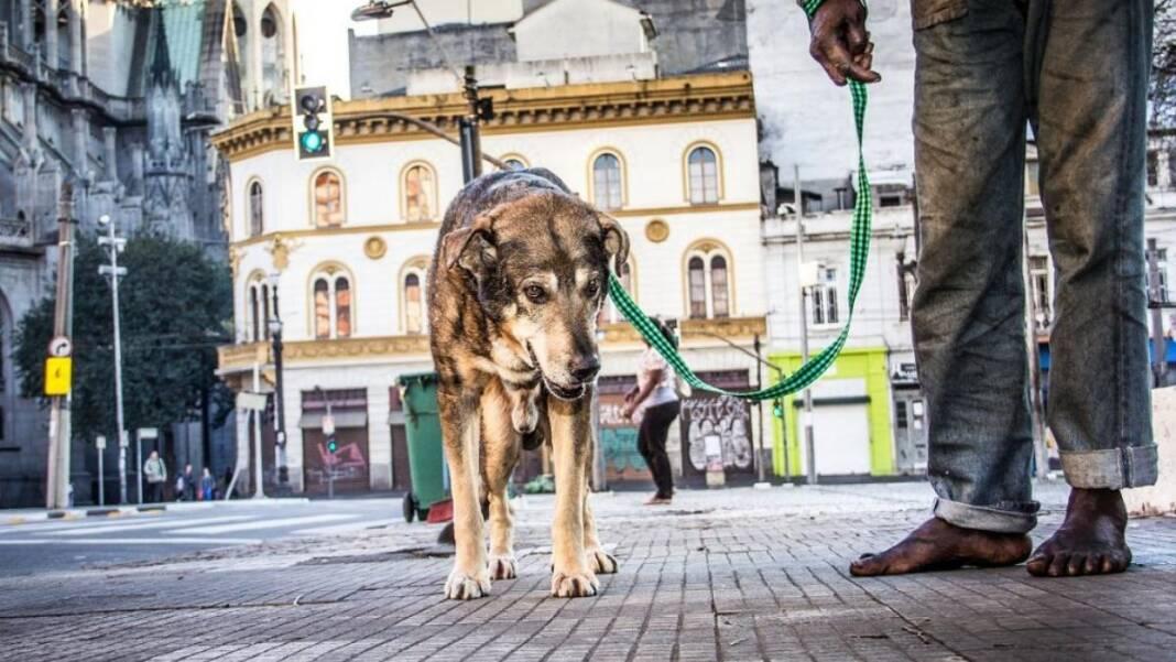Animal Morador de Rua