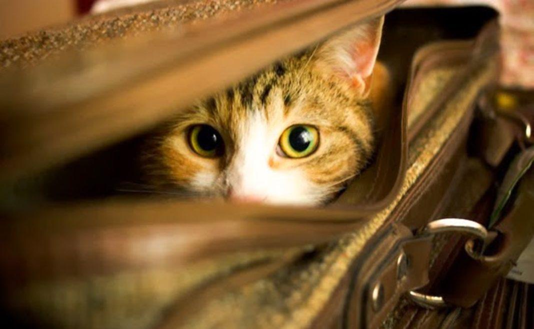 Como os gatos percebem o mundo?