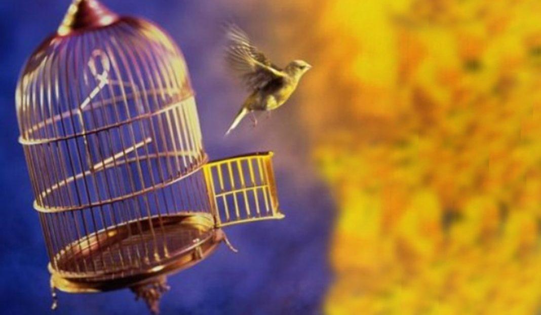 pássaros, soltos ou na gaiola?