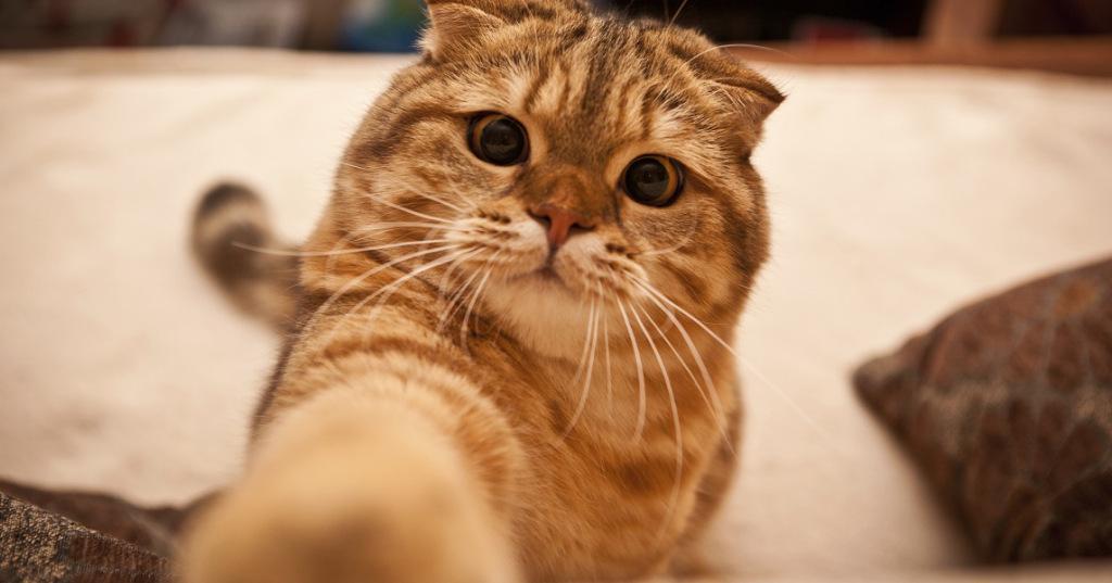gato sendo domesticado!