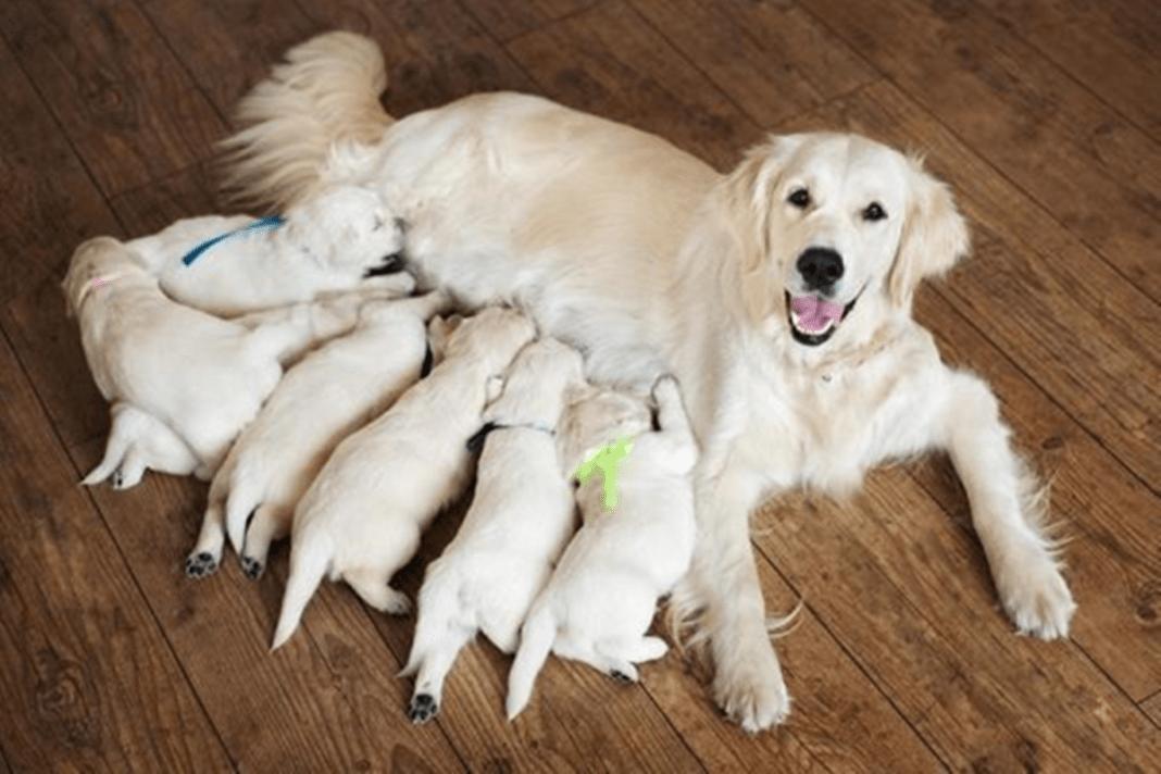 Cadela amamentando seus filhos!