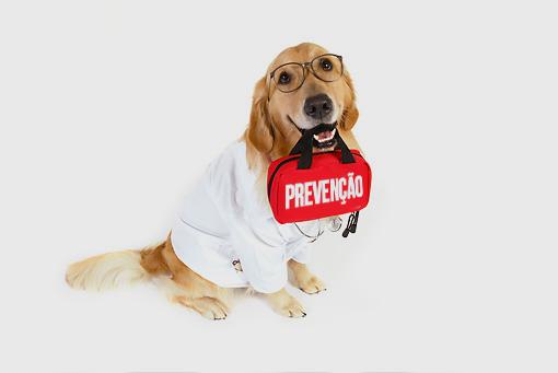 profilaxia em pets