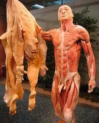 O Maior Órgão do Corpo