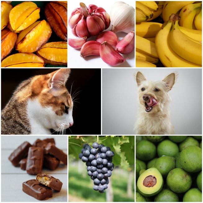 alimentos diferentes que não devem ser dados aos pets